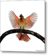 Cardinal Landing On Handle Metal Print