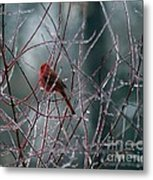 Cardinal On Ice Metal Print