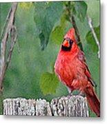 Cardinal Red Metal Print