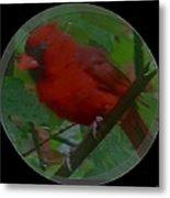 Cardinal Ring Metal Print