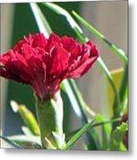 Carnation Named Hounsa Metal Print