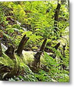 Carpet Of Ferns Metal Print
