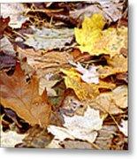 Carpet Of Leaves Metal Print