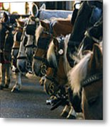 Carriage Horses Metal Print