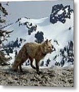 Cascade Red Fox 3 Metal Print