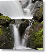 Cascading Creek In Temperate Rainforest Metal Print