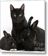 Cat And Rabbits Metal Print