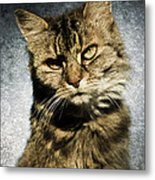 Cat Asks Question Metal Print by David Lade