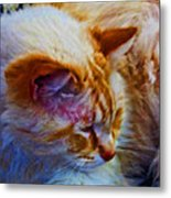 Cat Concentration Metal Print