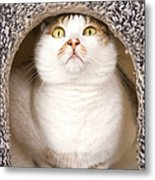 Cat From Cats House Metal Print