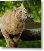 Cat Hanging On A Limb Metal Print
