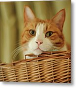 Cat In Box Metal Print