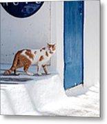 Cat In Mykonos Metal Print