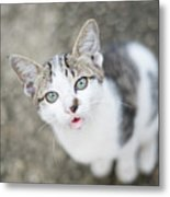 Cat Looking Up Metal Print