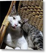Cat Lying On Wooden Children Chair Metal Print by Sami Sarkis