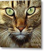 Cat Named Hooch Metal Print