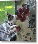 Cat Nap Curtain Metal Print