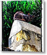 Cat On Medieval Wall Metal Print