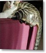 Cat On Sofa Metal Print