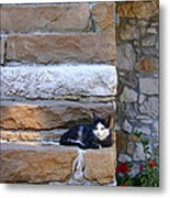 Cat On Stairs Metal Print
