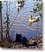 Cat Play Metal Print by Joan Meyland