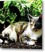 Cat Relaxing In Garden Metal Print