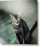 Cat Sitting On Floor Metal Print by Raj's Photography