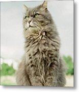Cat Sitting Metal Print