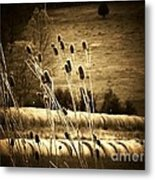 Cat Tails And Hay Rolls Metal Print