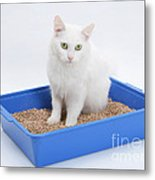 Cat Using Litter Tray Metal Print