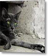 cat Metal Print by Zuzanna Nasidlak