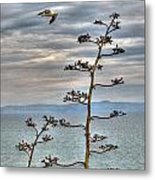 Catalina Gull And Channel Metal Print