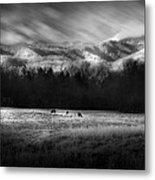 Cataloochee Elk Grazing The Fields Metal Print