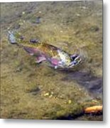Catch Me You Can Metal Print by Phyllis Britton