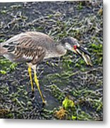 Catching Crab Metal Print