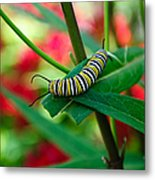 Caterpillar Before The Butterfly 1 Metal Print