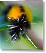 Caterpillar In Abstract Metal Print