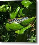 Caterpillar Photograph Metal Print