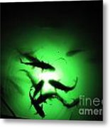 Catfish At Night Metal Print