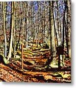 Catoctin Trail Metal Print