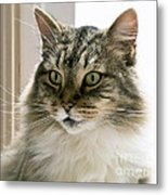 Cats Are Magical Metal Print