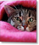 Cat's Den Metal Print by Christian JACQUET
