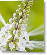 Cat'swhiskers Metal Print