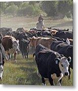 Cattle Drive Metal Print