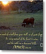 Cattle On A Thousand Hills Metal Print