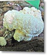 Cauliflower Mushroom On Log Metal Print