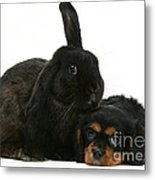 Cavalier King Charles Spaniel And Rabbit Metal Print