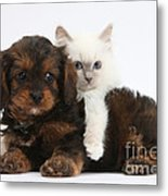 Cavapoo Pup And Blue-point Kitten Metal Print