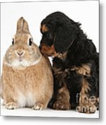 Cavapoo Pup And Sandy Netherland-cross Metal Print