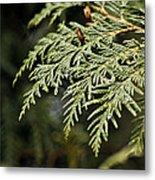 Cedar Due Droplets Metal Print